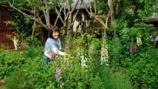 ②ジキタリスの花咲く初夏の庭